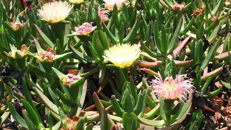 3. Remove Invasive Plants