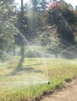 8. Remove Sprinklers near Sidewalks and Driveways