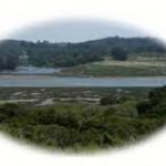 elkhorn native plant nsy