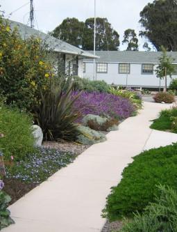 2. Practice Natural Pruning & Plant Spacing