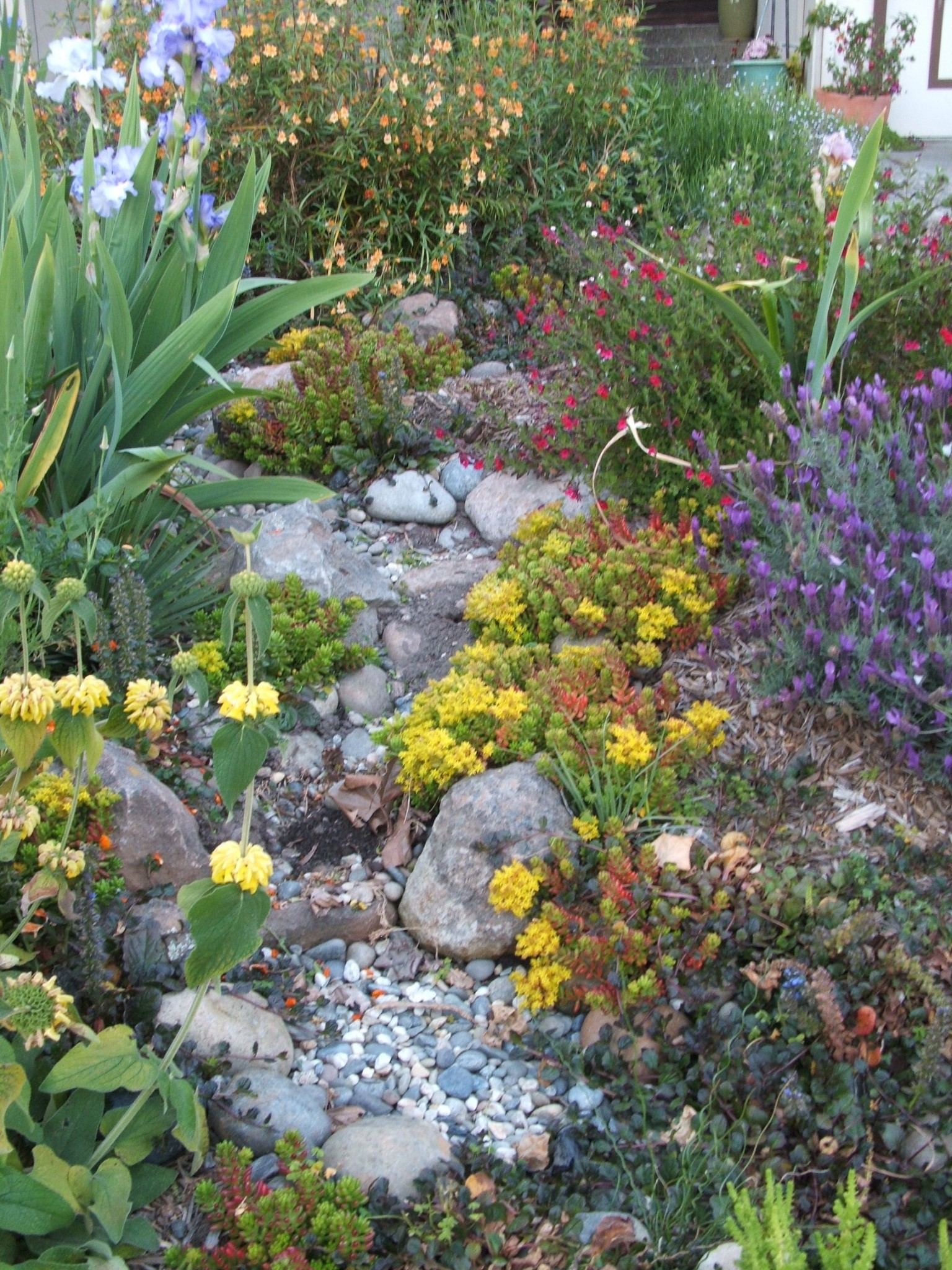 Rain gardens monterey bay friendly landscaping for Gardening and landscaping