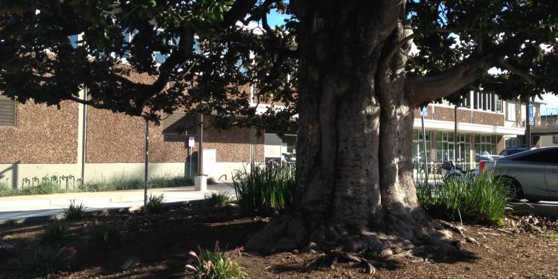 Magnolia-View