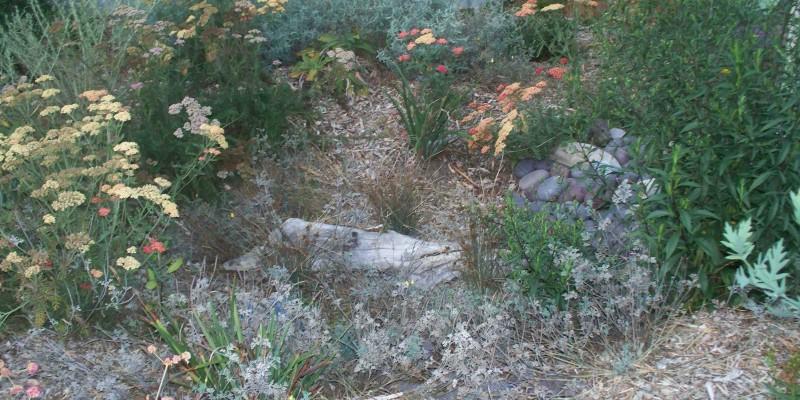 Grange-Rain-Garden1