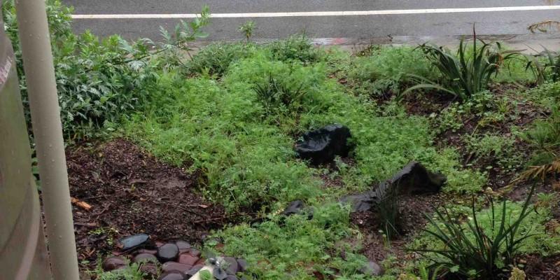 Overflow-to-Rain-Garden1