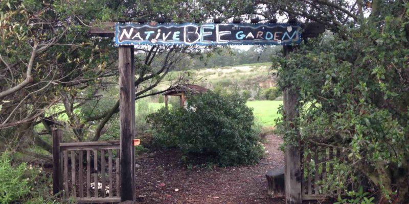 native-bee-garden