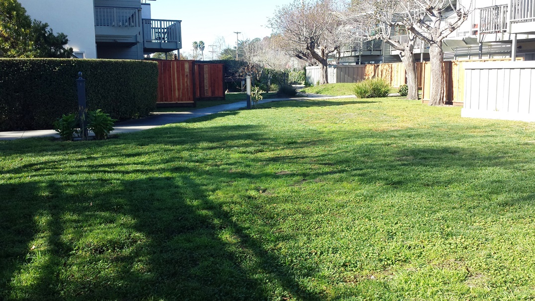 6,000 square feet of turf grass before the Monterey Bay Friendly Landscaping retrofit