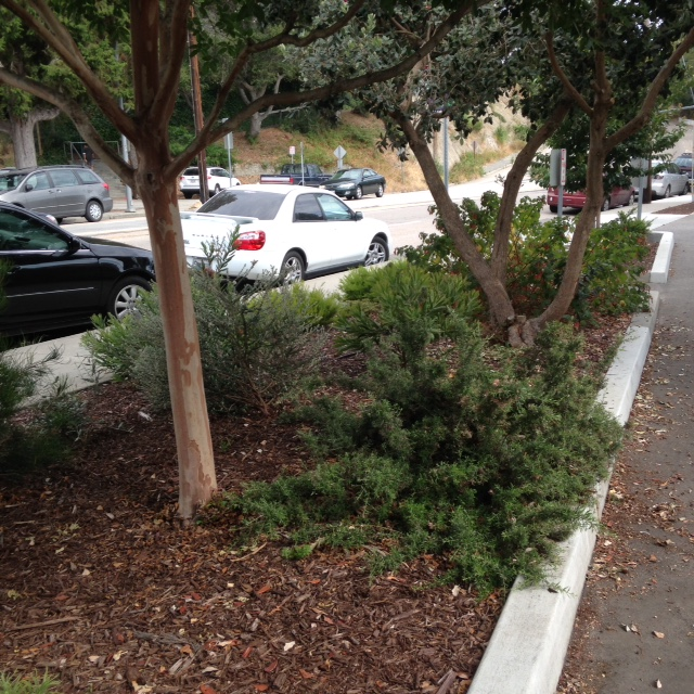 Drought-Tolerant-Landscaping