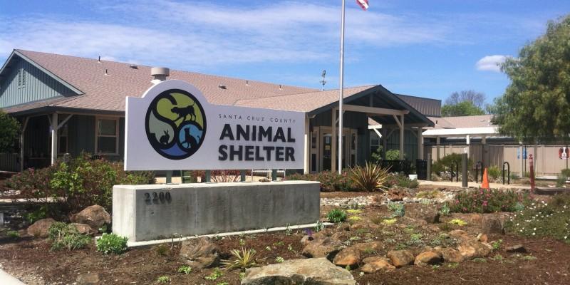 SC County Animal Shelter