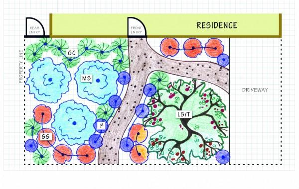 Mixed Evergreen Forest Landscape Design