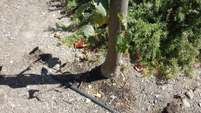 irrigation-schaffer