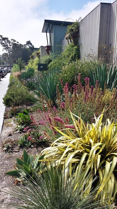 plants-shaffer