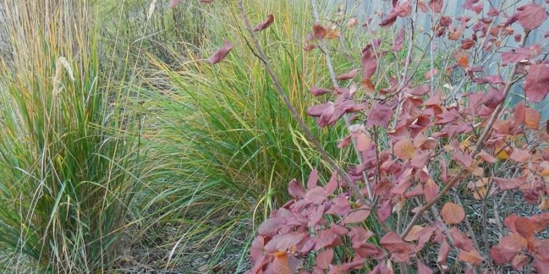 6. Rain garden plants
