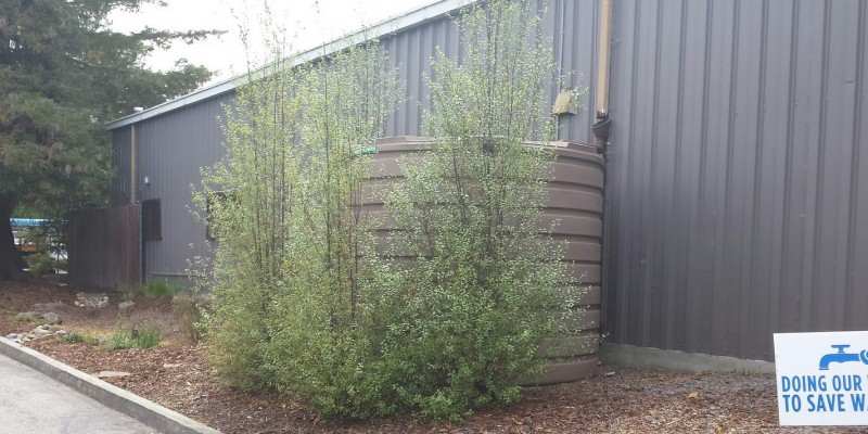 Tank covered with pittosporum-001