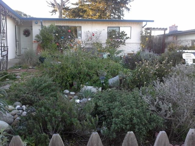 Front-garden-640×480