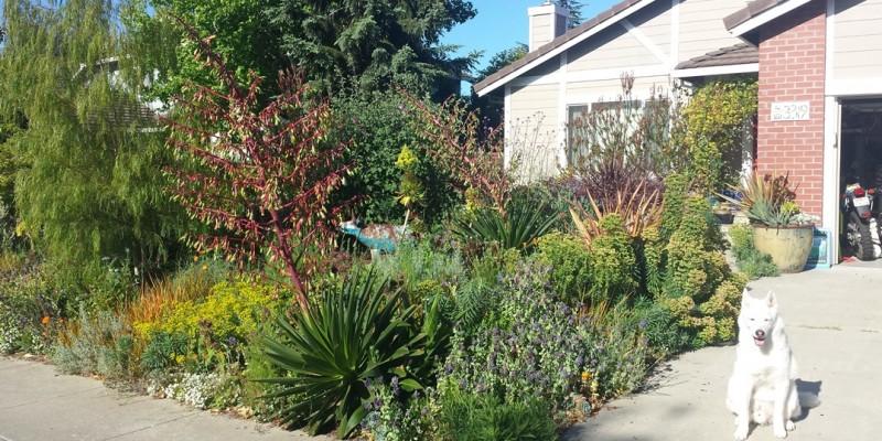 Oneill-crazy-spring-garden-4.30.15