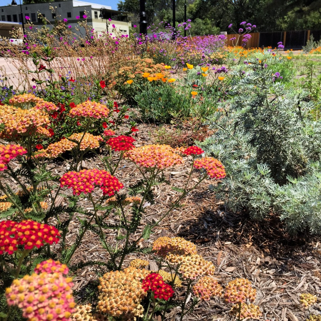 Certified Landscape Gallery | Monterey Bay Friendly Landscaping