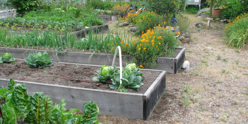 Raised Beds 2